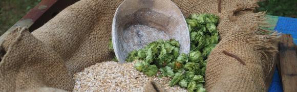 Historic brewing demonstration with fresh hops
